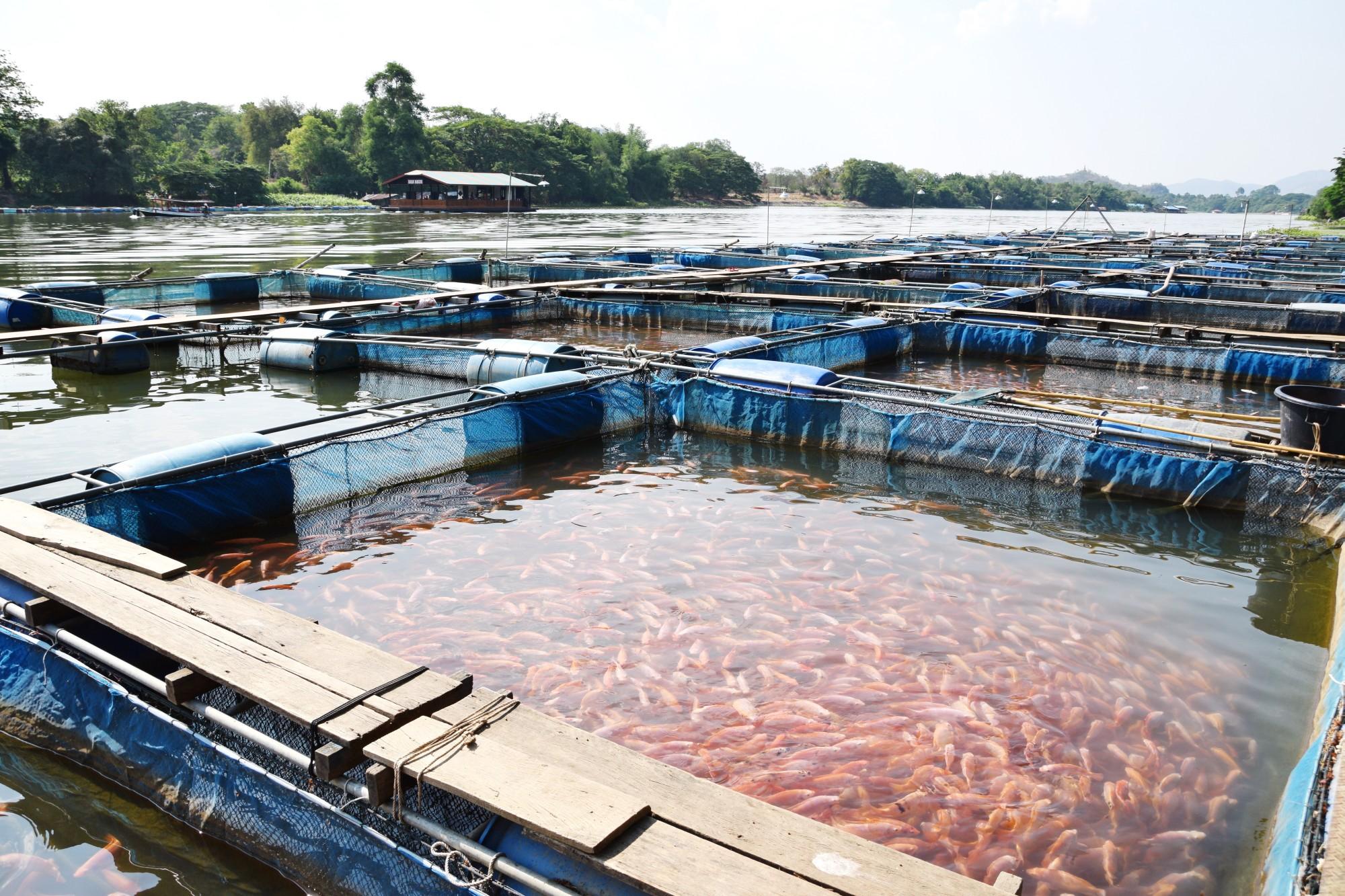 Resultado de imagem para aquacultura china