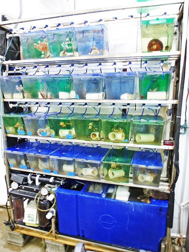 Pequeno sistema de recirculação para manutenção e reprodução de peixes marinhos