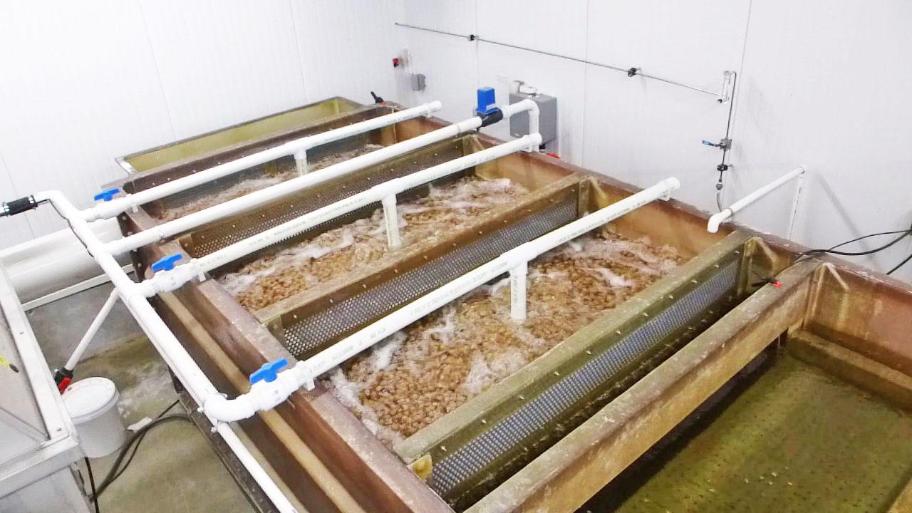 Biofiltro (montado em um tanque de fibra de vidro com divisórias de tela) com grande quantidade de substratos de plástico em suspensão (fluidizado) que suporta um sistema de recirculação de médio porte, usado para estudos nutricionais e para produção de tilápias nas instalações da Alltech (Lexington, KY, USA). Os substratos de plástico flutuam na água e são mantidos em constante movimento por uma tubulação que injeta ar no fundo de cada compartimento do tanque