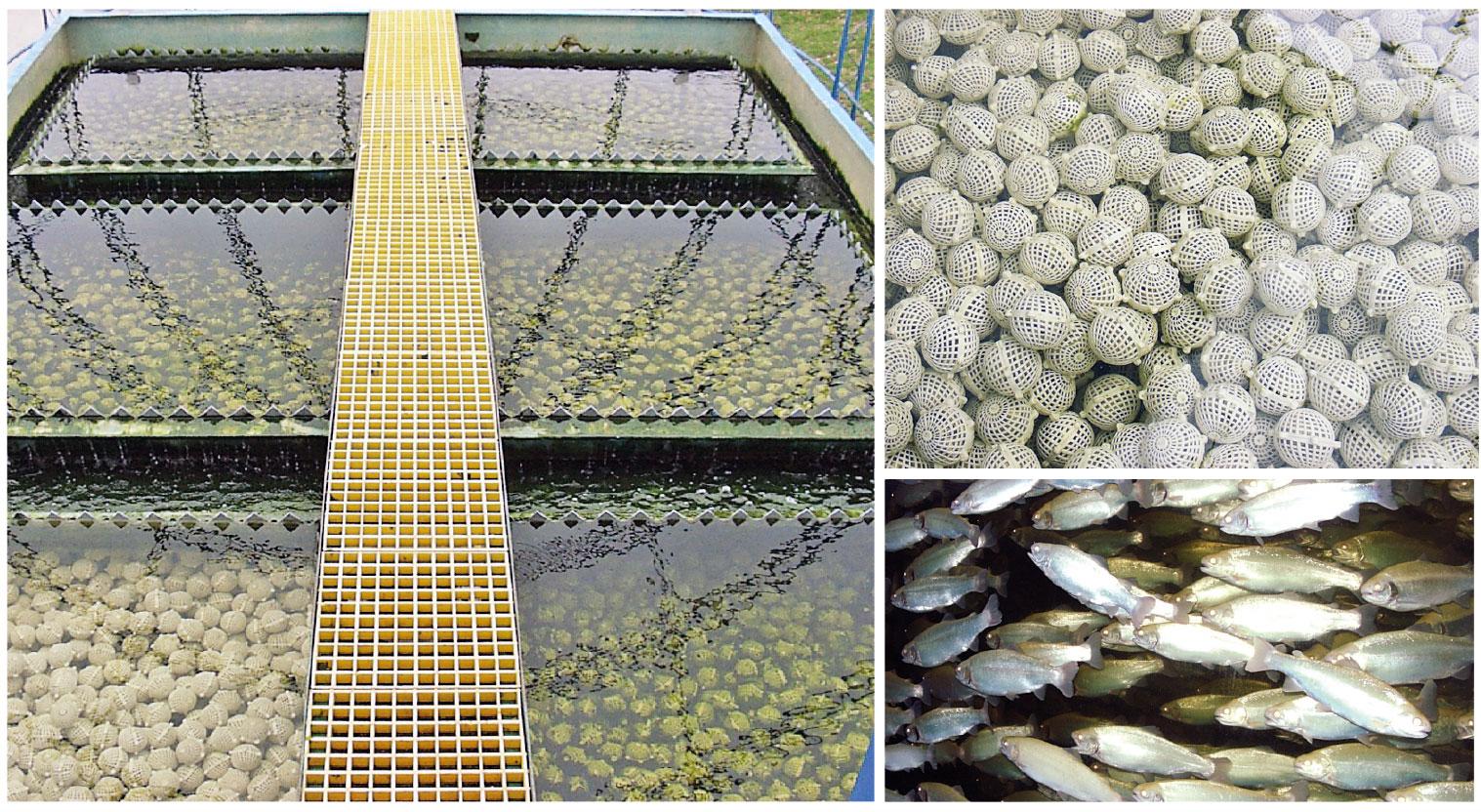 """Biofiltro submerso com bolas de plástico vazadas (""""bioballs"""") em um sistema demonstrativo de recirculação com truta arco-íris em Xangai, na China"""